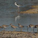 CE Wetland Restoration Project: San Dieguito Lagoon