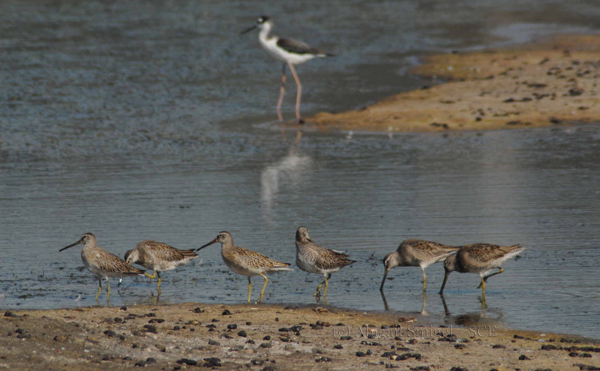 CE Project: San Dieguito Lagoon (featured image)
